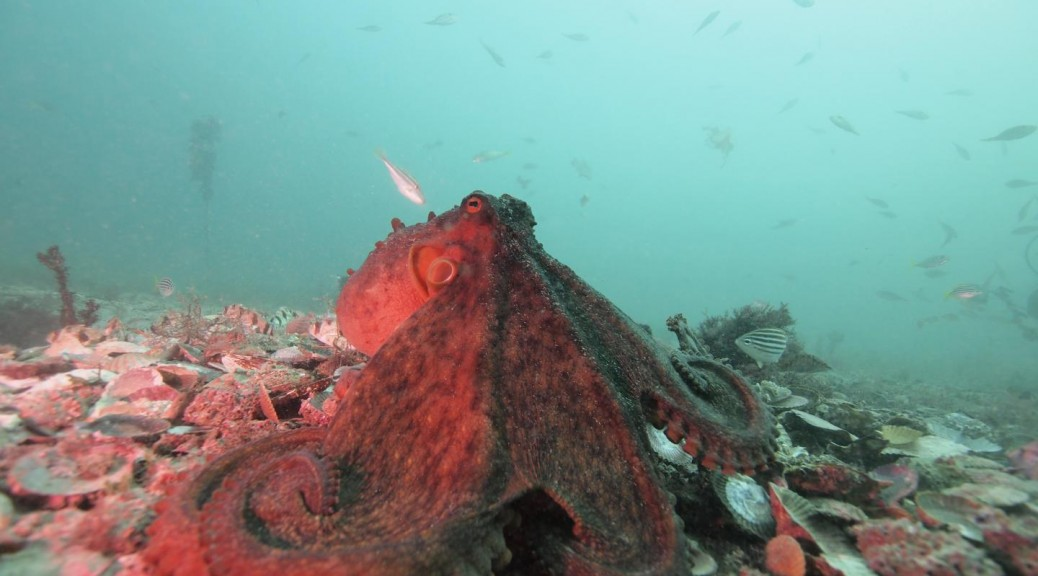 A looming Octopus, courtesy of David Scheel
